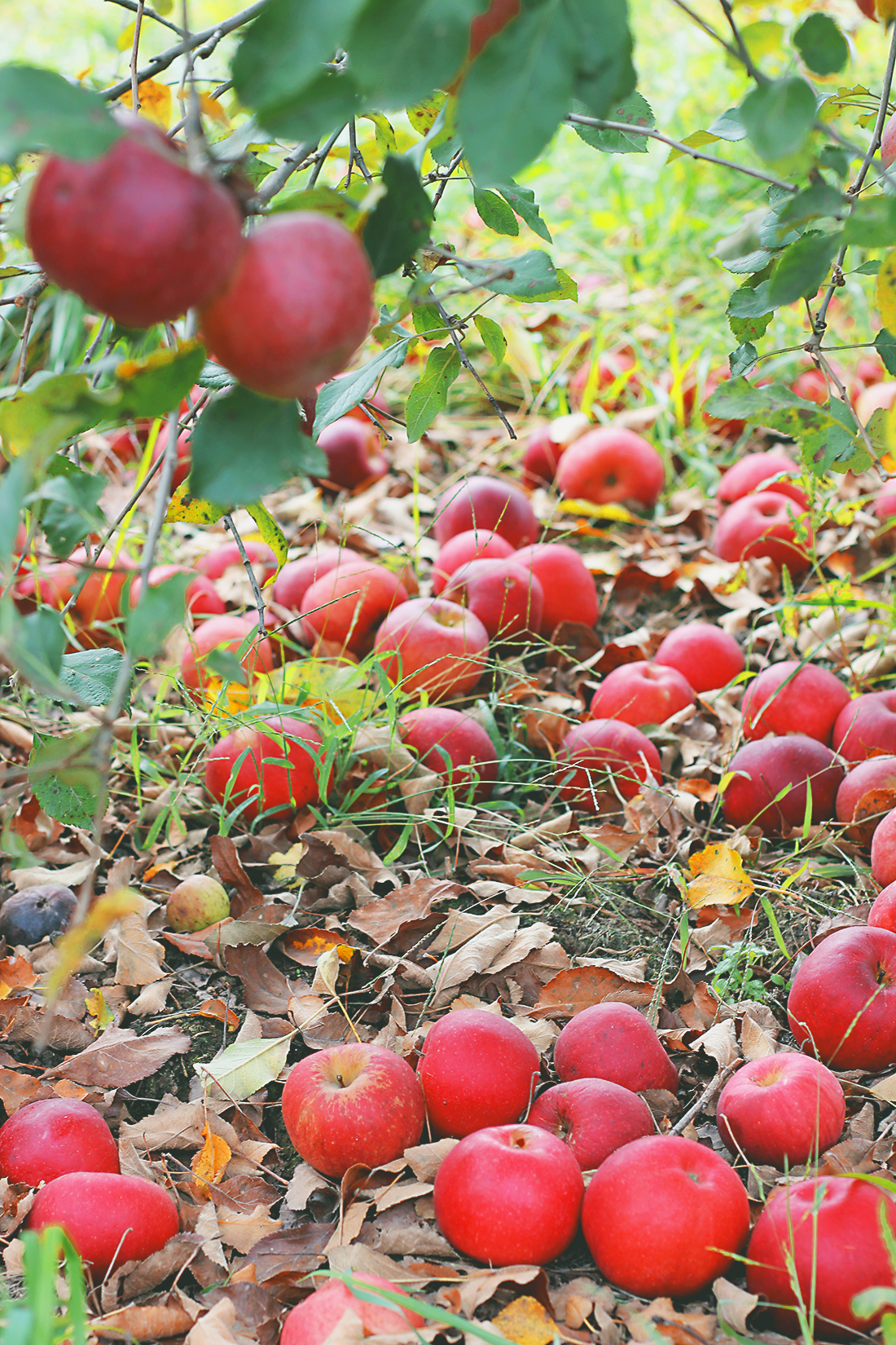 apple-picking-how-to-style-hunter-boots-3