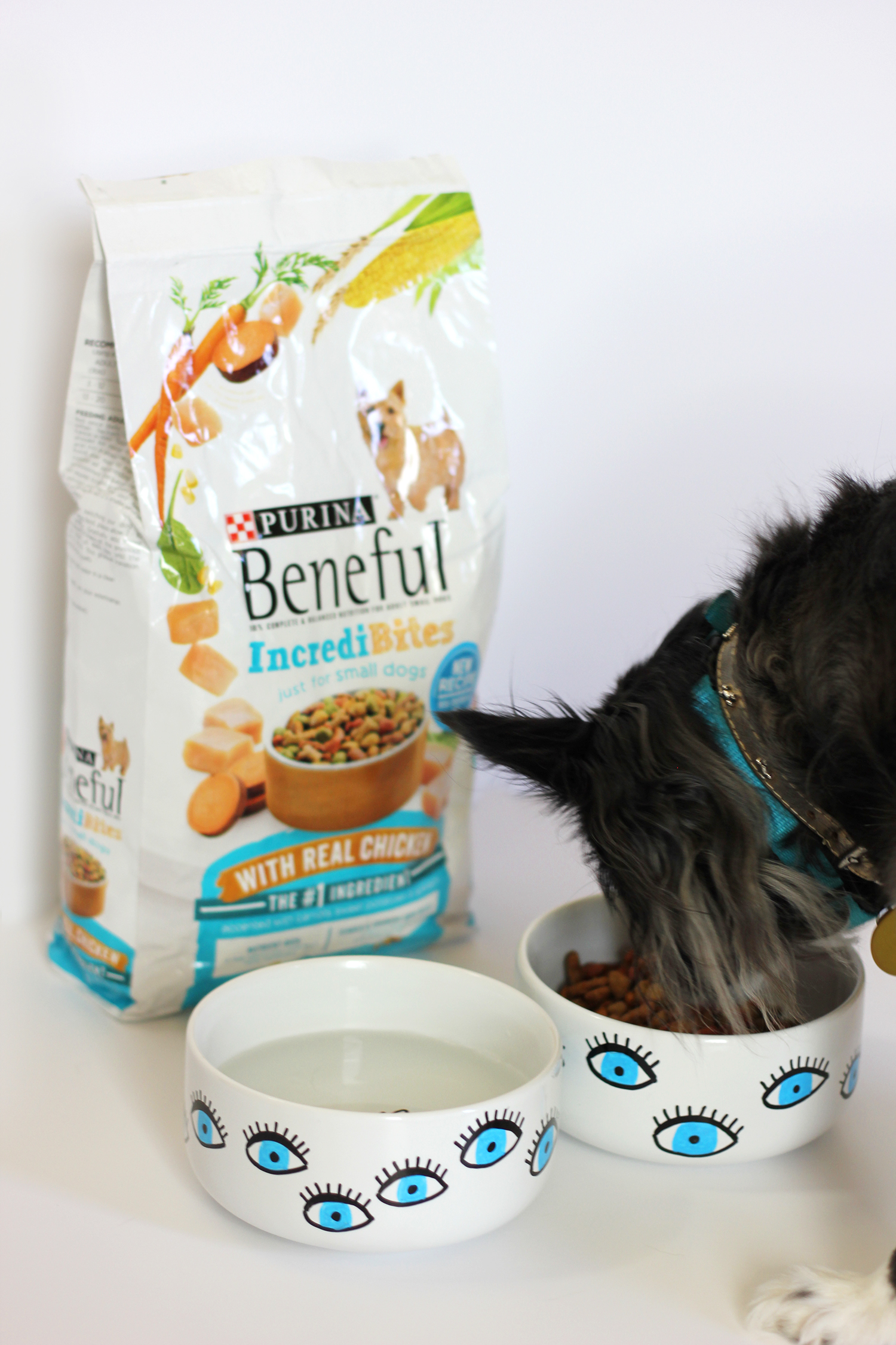 diy-dog-bowl-beneful-1