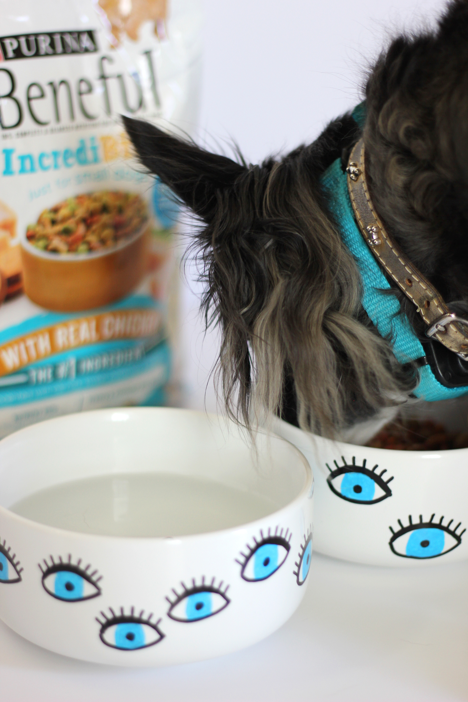 diy-dog-bowl-beneful-2